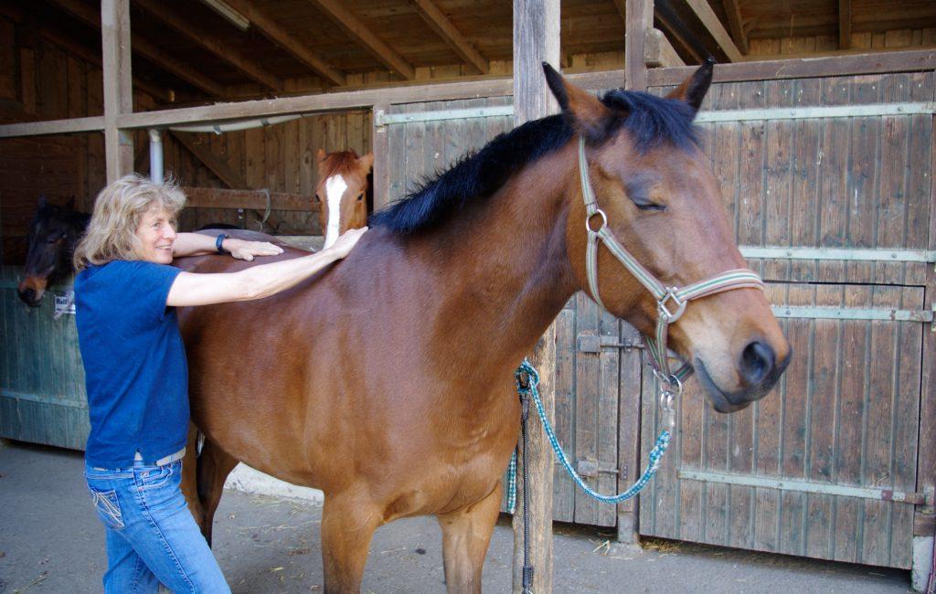 Fotoserie Physiobehandlung beim Pferd